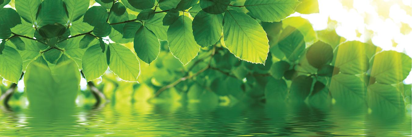 banner-green-line-naslovni-Prepoznavamo-potrebe-vase-koze-1350x450px-BT